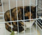 Кошки и котята: ищут дом