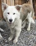 Собаки и щенки: ищут дом